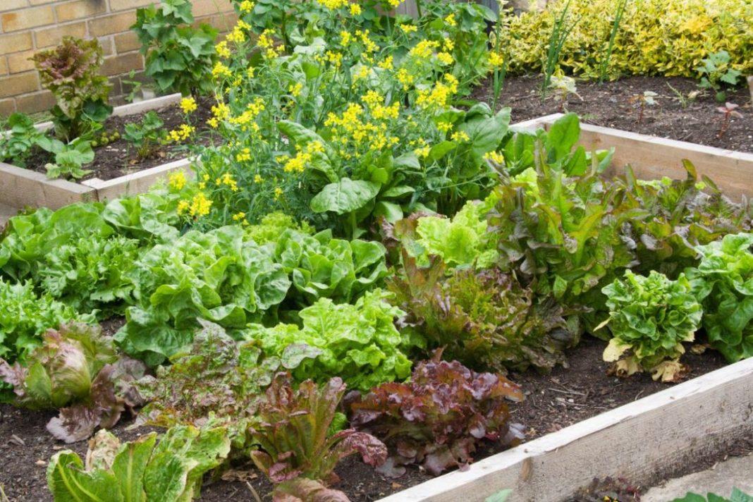 legume de gradina